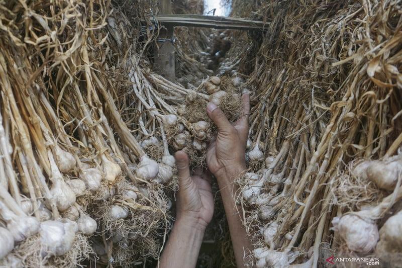 antarafoto target produksi bawang putih nasional 220820 hpp 4
